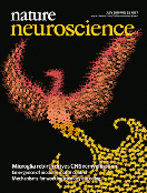 The mysterious origins of microglia.